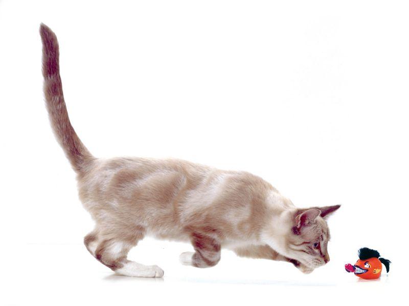 Картинки котят без фона