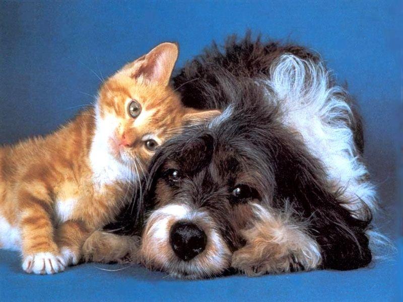 красивые картинки про котят и собак нас