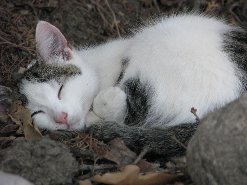 свернувшийся котенок картинки получения
