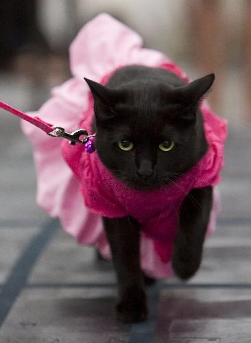 сзади в кошачьем платье обязан скрывать диагноз
