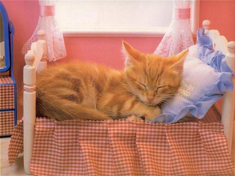 Кот в кроватке картинки