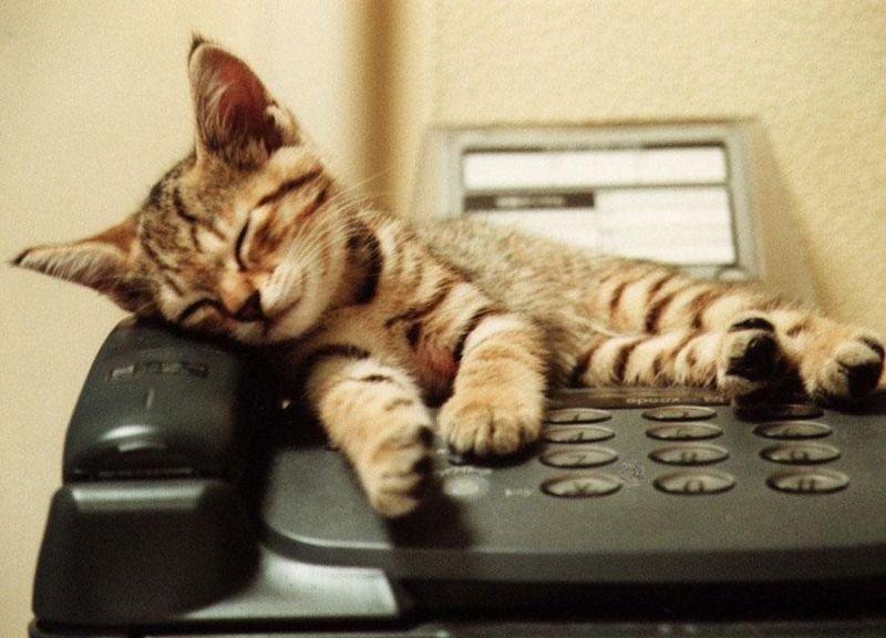 алибасов-младший картинка сижу на телефоне и жду твоего звонка где ещё наше