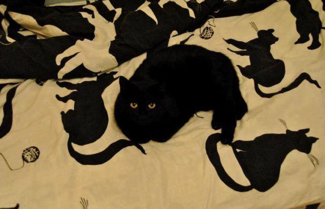 Картинки черных кошек с надписями