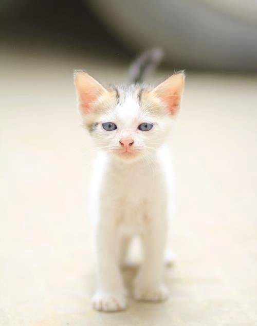 Тощий котенок фото