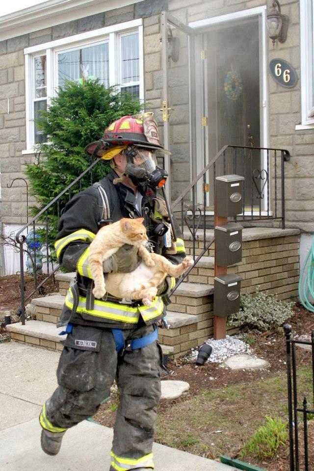Рисунки, картинка с двумя котами вынесенными из пожара