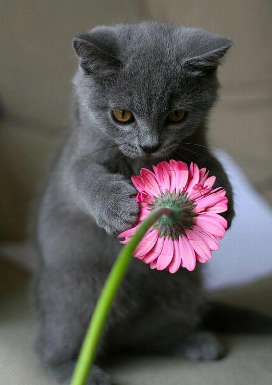 Прикольная картинка котик с цветами, надписью спасибо милый