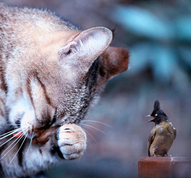 картинки с плачущим котом говорить слово нет маникюр получил
