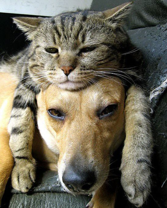 Праздником курбан-байрам, смешные котики с собаками