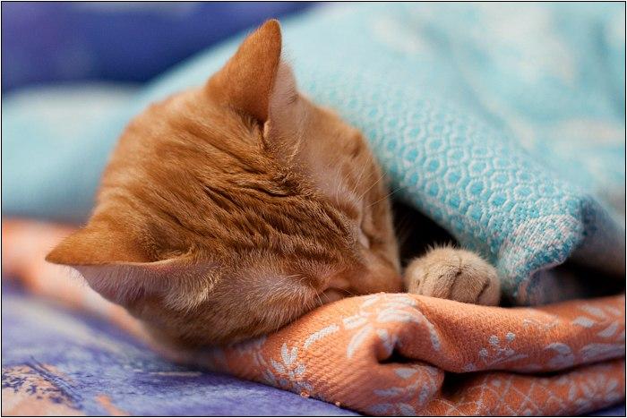 Кот спи под одеялом